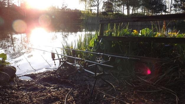 Dawn catfish hunting